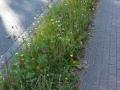 20140917bluehstreifen_holzener-weg1